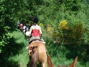 paardrijden vakantiewoning